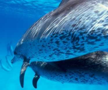 dolphin tous in Lanzarote boat trips